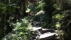 Unser Panoramaweg über Stock und Stein.