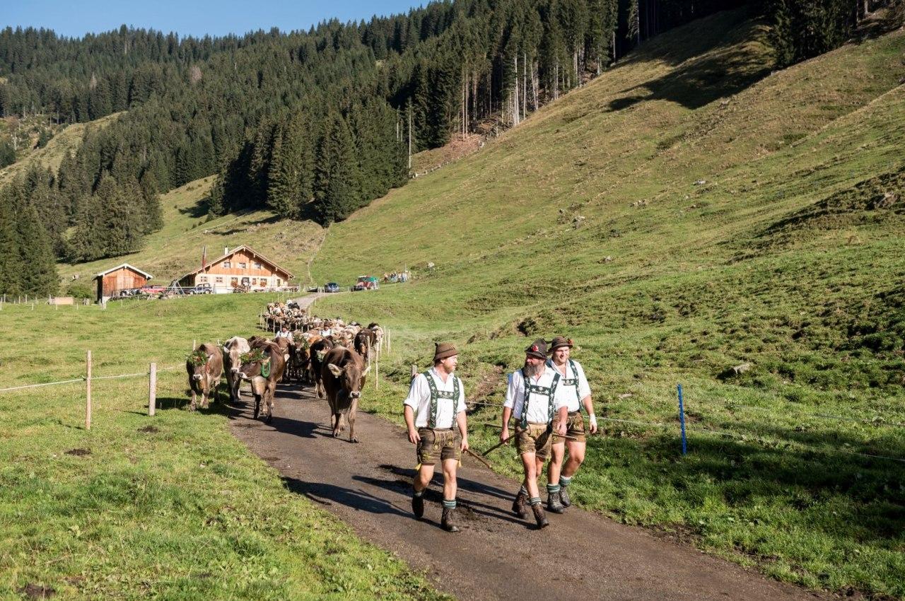 Viehscheid in Bolsterlang im Oberallgäu, © Tourismus Hörnerdörfer, F. Kjer