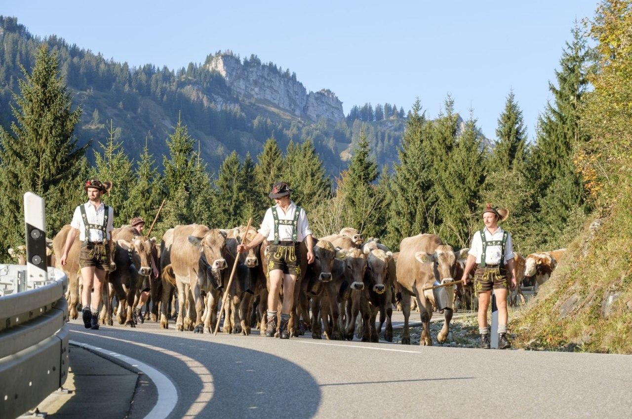 Die Hirten sind mit ihren Kühen auf dem Weg zum Almabtrieb in den Hörnerdörfern, © Tourismus Hörnerdörfer / ProVisionMedia