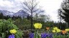 Frühlingsblumen im Kräutergarten in Fischen, © FeWo Speigl
