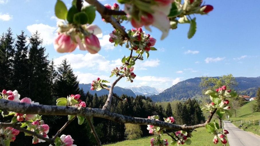 Frühling, © Haus Alpensonne - Bolsterlang