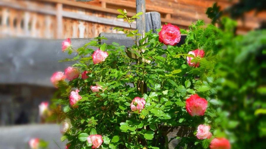 Garten, © Casa Montana