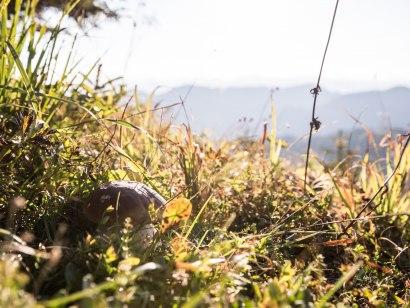 Beim walken genießen wir die Natur., © Tourismus Hörnerdörfer GmbH
