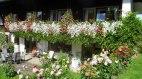 Blütenpracht im Wandersommer - Gästehaus Weitnauer, © Gästehaus Weitnauer - Fischen-Au im Allgäu