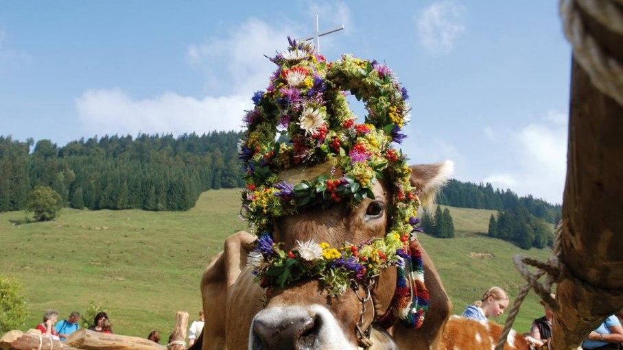 Viehscheid im Spätsommer, © Ferienhaus Riss - Bolsterlang